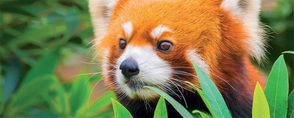 Zoo de la fl che h tel restaurant balladins angers parc expo for Chambre zoo de la fleche